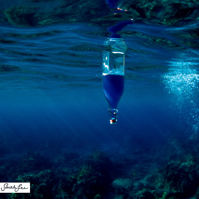 015-sarahlee-mana_wai_bluebottle_underwater.jpg