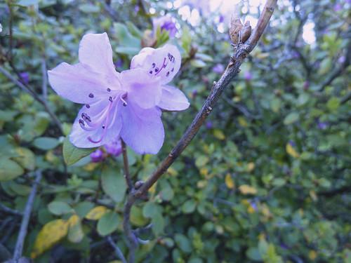 цветок ещеодин