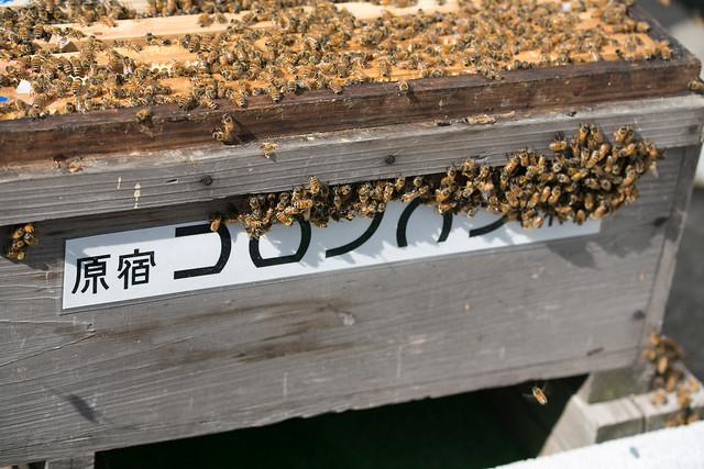 コロンバン原宿本店 養蜂見学