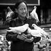 Pigeons' friend