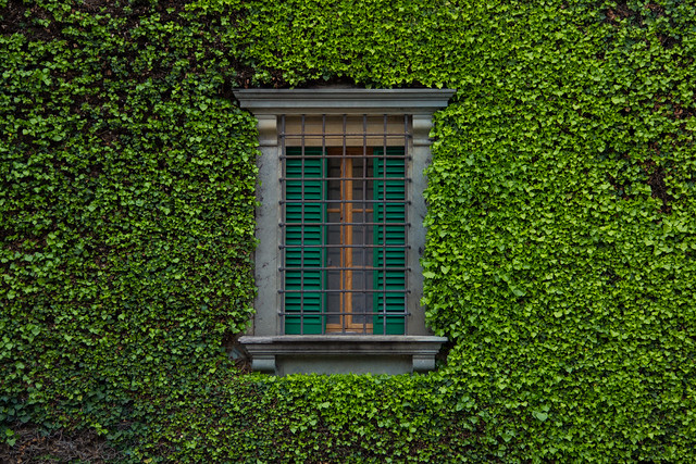 Vine Covered Window