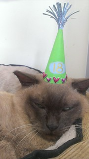 Abbey in her birthday hat
