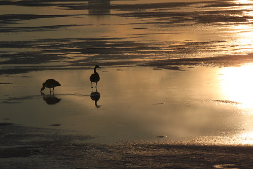 park winter sunset lake snow cold reflection ice water frozen geese midwest iowa ames goldenhour frozenlake 2015 amesiowa adahaydenpark adahayden photobyed goldenhoursunset 2015feb