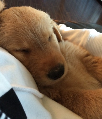 Minding my grand-puppy, Buddy.