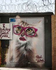 Blind Kitty
