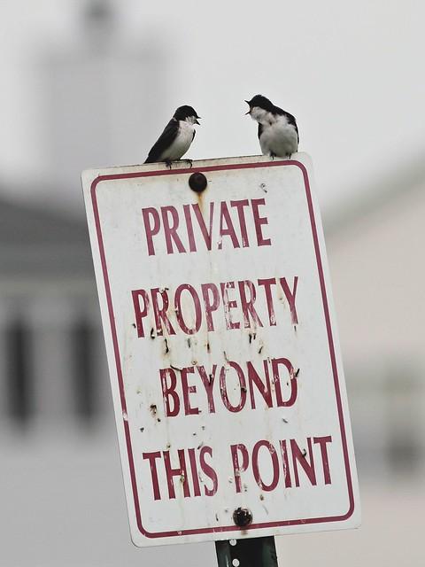 Property dispute 20130509