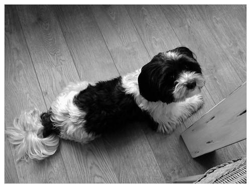 Very lovely dog