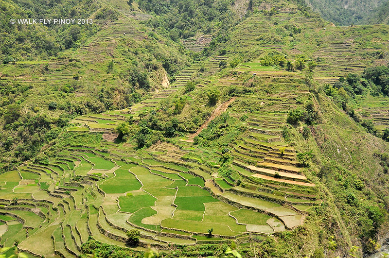 Rice Terraces near Tocucan, Philippine Cordilleras