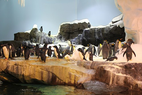 Antarctica: Empire of the Penguin at SeaWorld Orlando