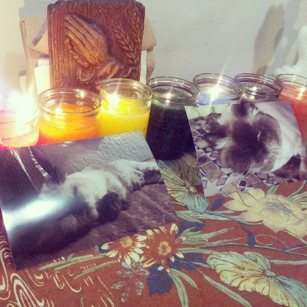 Bear's chakra candles. Rest in power little guy.
