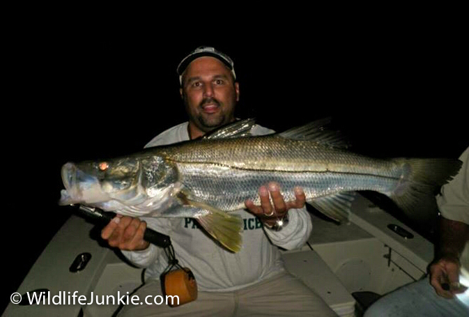 Miami Snook