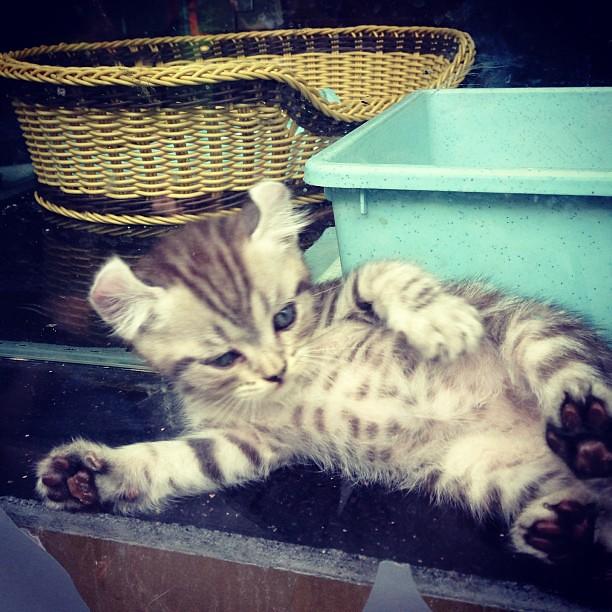 好漂亮的花纹 #cat