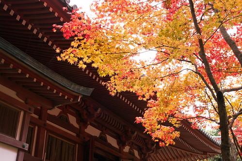 【写真】2012 紅葉 : 醍醐寺/2020-08-07/IMGP6857