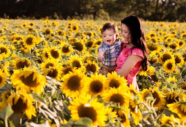 dallas sunflower field loft floral peplum