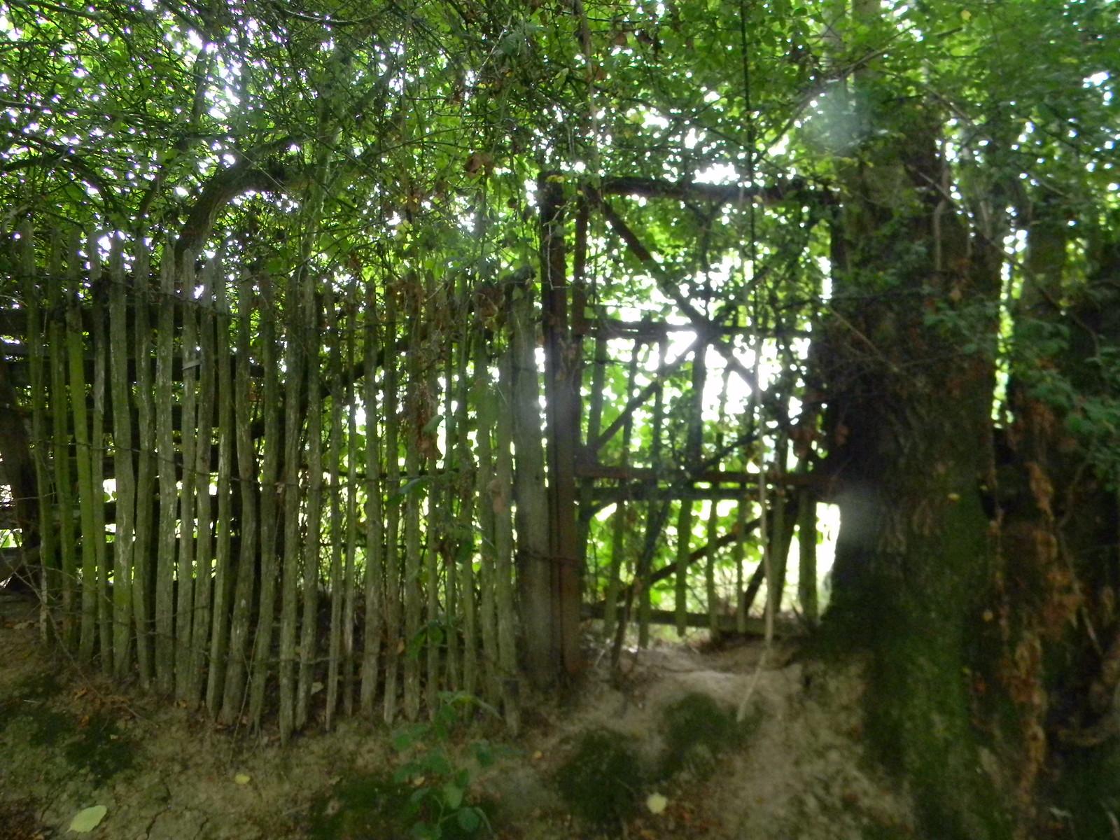 Ramshackle fence 4 Wadhurst Circular