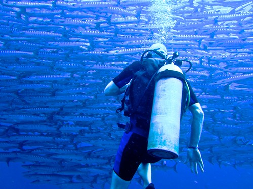to meet a wall of barracuda