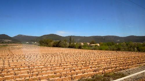 france field landscape vineyard nikon europe outdoor vineyards coolpix agriculture provencealpescotedazur p300 2013