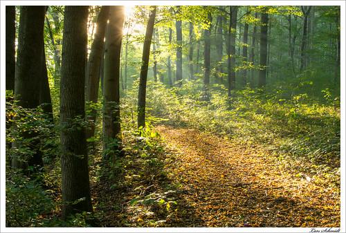 autumn nature forest 35mm herbst natur mm 35 wald schlotheim afsdxnikkor35mmf18g