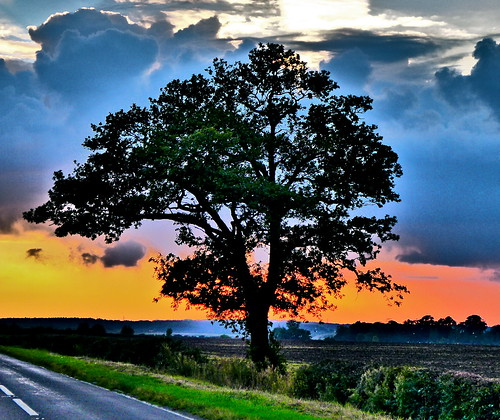 trees sunset england tree northamptonshire weldon upperbenefield eastnorthants mickyflick