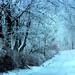 Winter Road by Harald Gjerholm