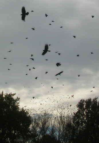 Storm Crows