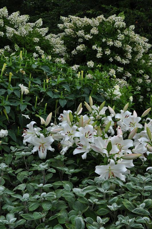 Flower Garden Walk (23)