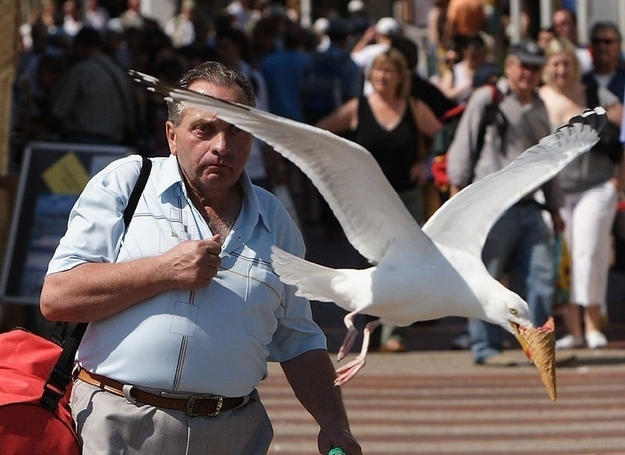 The perfectly timed a-hole seagull picture: