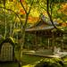 momiji '13 - autumn leaves #8 (Eikan-dou temple, Kyoto) by Marser