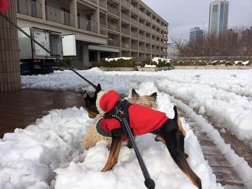 雪の上でパピンコとご挨拶。