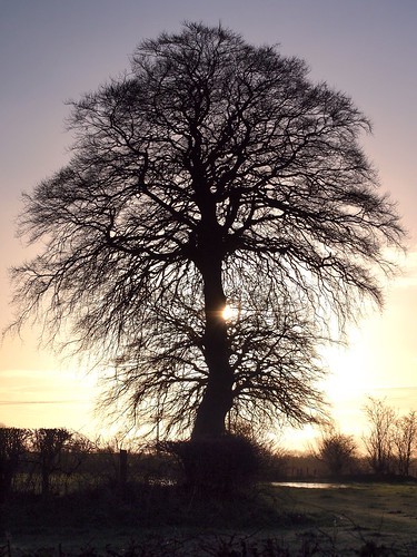 sky sun tree northernireland ballymena ulster antrim ahoghill