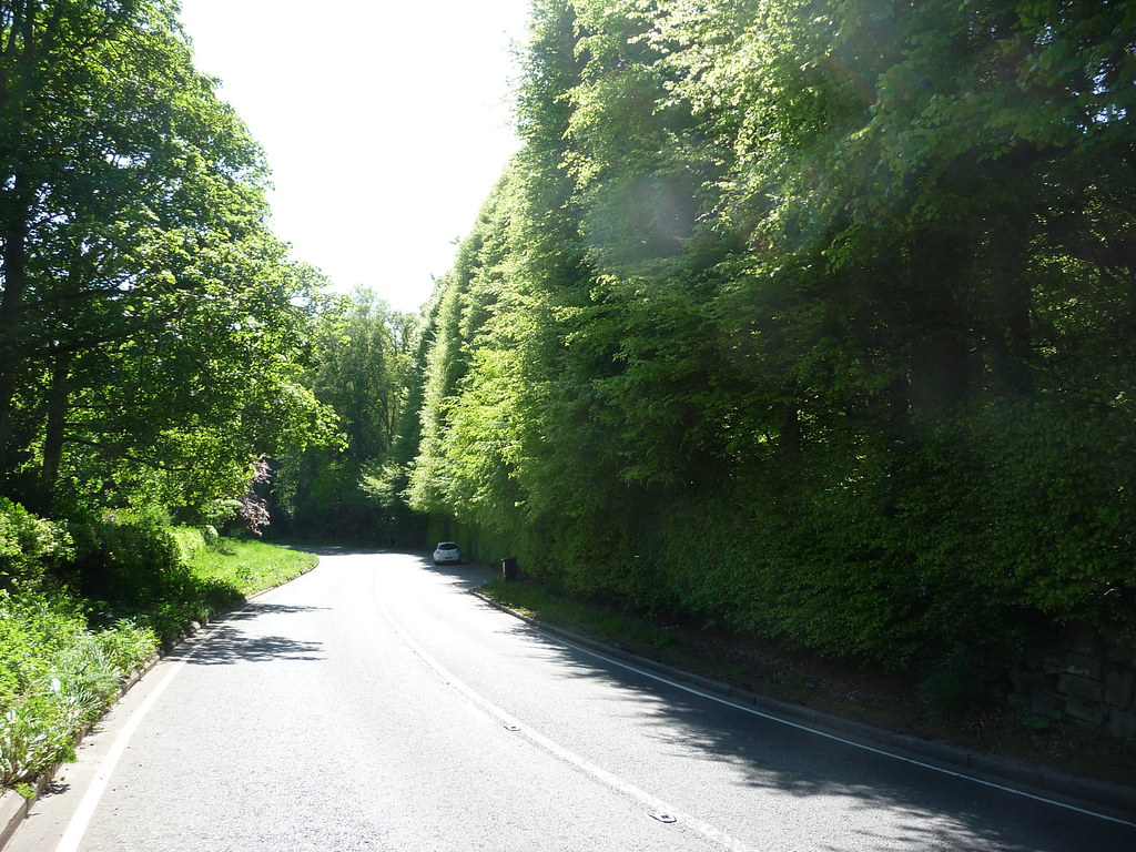 Beech Hedges,Meikleour