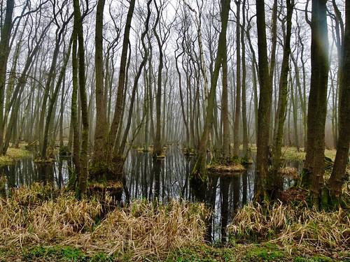Im Naturschutzgebiet Bürgerholz bei Burg
