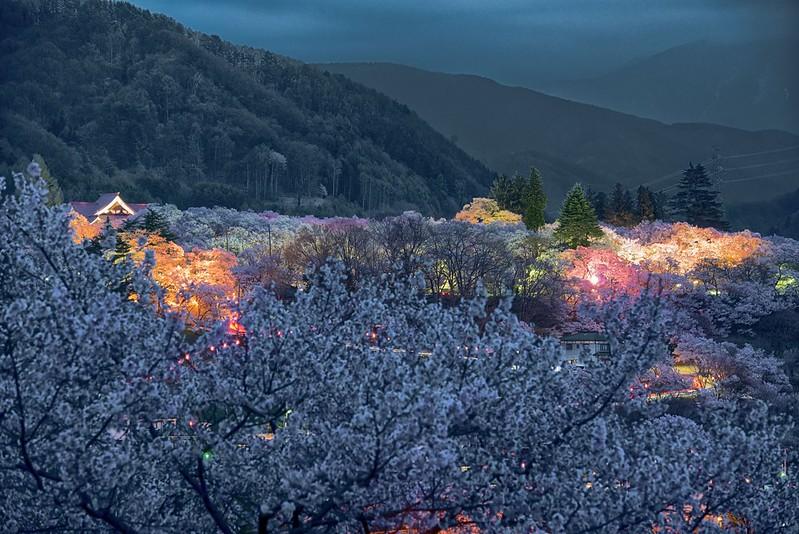 高遠城址の桜2014