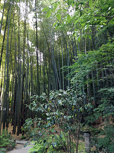 houkokuji_6