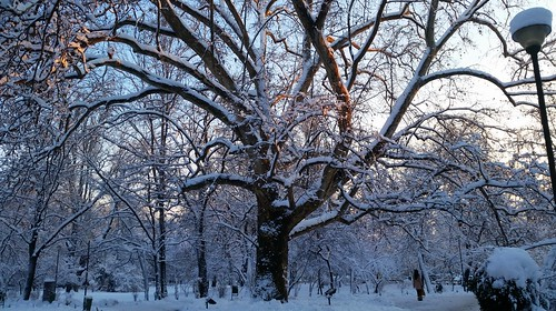 park sunset snow romania bigtree treebranches bucuresti cismigiu snowytrees snowcoveredtree