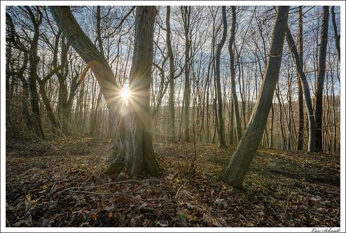 natur landschaft sonne wald gegenlicht bildbeschreibung tamron1024mmf3545spdiiildaslif