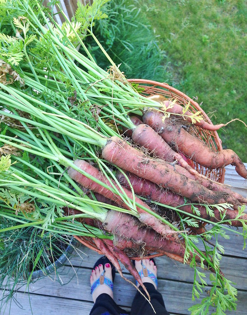 garden carrots Smells Like Home