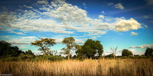 africa leica travel blue trees wild sky nature beauty yellow clouds landscape freedom bush power god safari explore nationalgeographic paologamba
