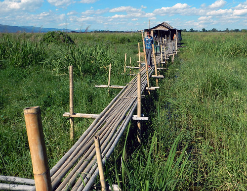 Bamboo walkway across the fields seen on our bike trip around Inle Lake in Myanmar.