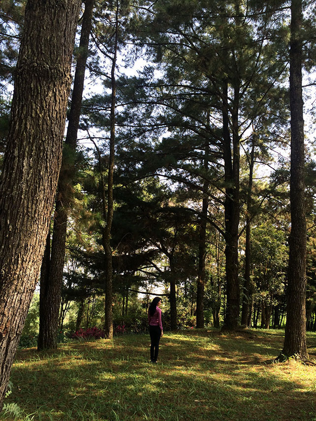 BTS Pohon Keramat 6