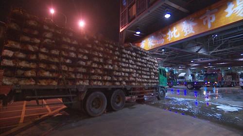 滿載活雞的貨車。
