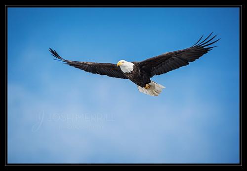 Soaring Eagle-
