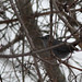 parulidaephotos has added a photo to the pool:Rare in winter, found yesterday at location, Northwest campus, UMASS, Amherst, MA, Jan 30, 2015ebird.org/ebird/view/checklist?subID=S21604022