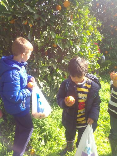 «Μαζεύουμε πορτοκάλια»- Εκδρομή στην Κόρινθο- Σάββατο 7 Φεβρουαρίου- 9.30-3 το μεσημέρι
