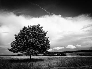 Taunus Tree