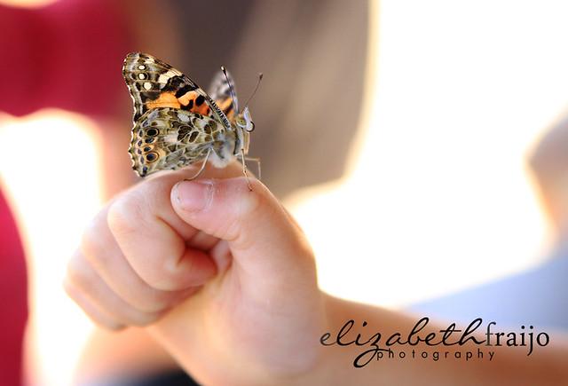 Butterflies03W