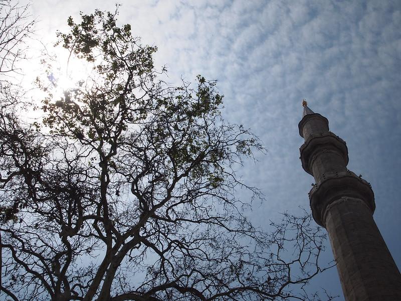 minaret-tree