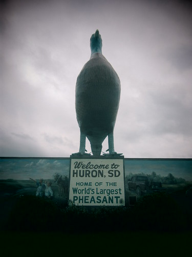 Huron: Home to the worlds largest pheasant