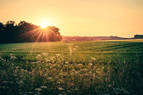 light sunset summer orange sun sunlight nature field silhouette landscape abend licht nikon warm day sonnenuntergang hessen nacht frankfurt sommer hey natur felder wiese wiesen autobahn clear gras florian grün flughafen fx sunrays landschaft sonne wald bunt sonnenstrahlen sunbeams lichter heu dreieich sunstar d4 sonnenlicht götzenhain 2470f28 leist flowtation dreieichenhain nikond4 nikon2470 nikon2470mmf28 florianleist florianleistphotography florianleistfotografie flowtationde florianleistde
