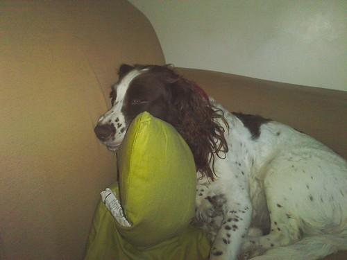 Sula pretending to sleep by Calum Hall Tobermory